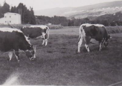 Sandviken i 1960